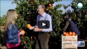 naranjas-lola-aqui-la-tierra